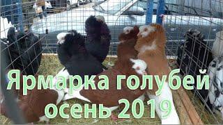 ЯРМАРКА ГОЛУБЕЙ Москва осень 2019 РЫНОК САДОВОД
