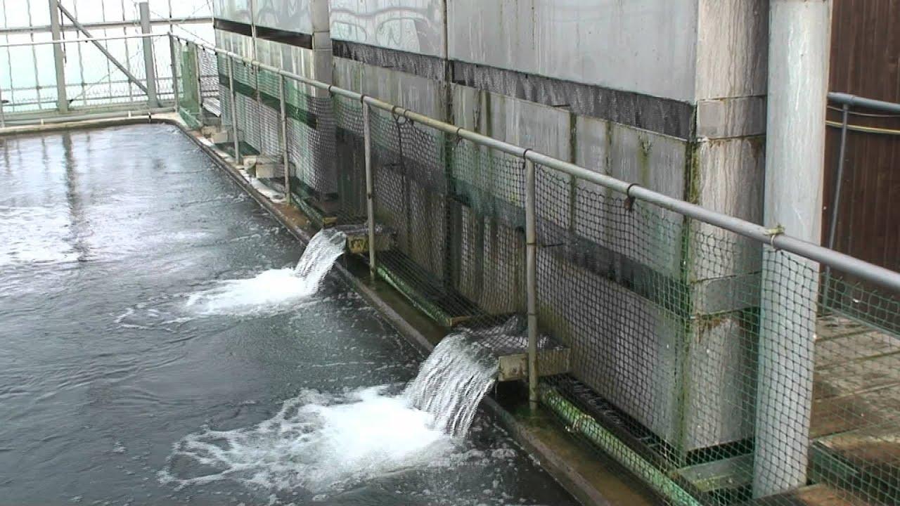 Momotaro Bakki Shower.mov