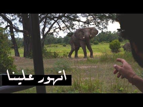 واجهنا الافيال في زامبيا    -   8hours safari