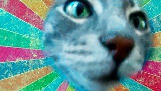 Кошка Бусинка нюхает камеру. Слушать смех в конце!