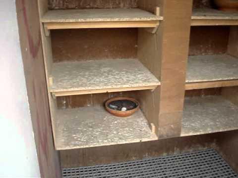 Klein duivenhok youtube for Binnen interieur