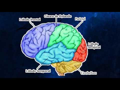 Bases Biologicas Del Aprendizaje Youtube