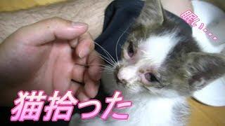 田んぼで拾った猫を育てる