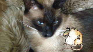 Не ловят уж коты мышей и ждут подарки с магазина :)