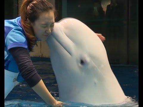 """Love Story"" Of A Beluga Trainer In NE China"