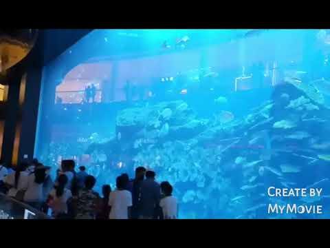 Dubai Mall Fish Aquarium |Underwater Zoo | Dubai Expo 2021#shorts #ytshorts #dubai