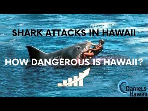 Shark Attack in Hawaii - What island in Hawaii has most Shark Attacks? Safe to swim in Hawaii?