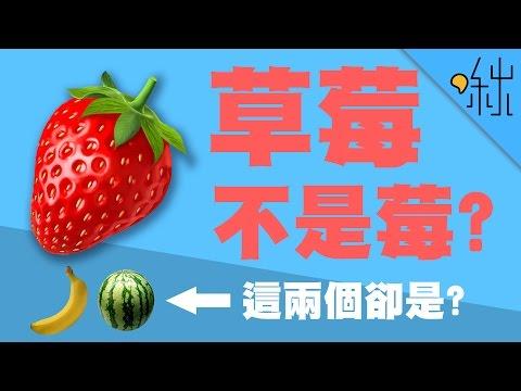 草莓不是莓,西瓜和香蕉卻是!? | 超邊緣冷知識第15集 | 啾啾鞋