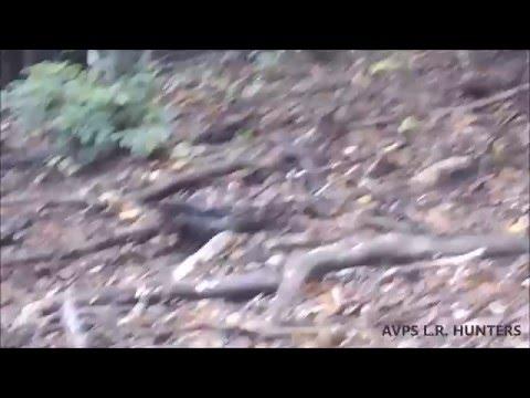 AVPS L.R. Hunters - Cerb