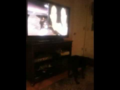 My dog likes Michael Jackson