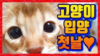 고양이 입양기. 새끼고양이 입양 첫날 강아지 반응 (아비시니안 아기고양이 분양 첫날 적응기 영상)