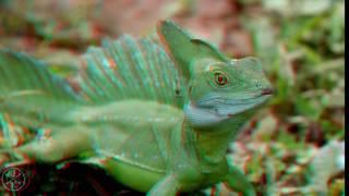 COSTA RICA IN 4K 60fps ULTRA HD w Freefly 3D