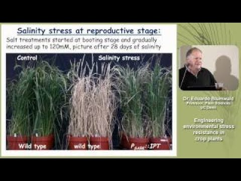 Engineering Environmental Stress Resistance in Crop Plants