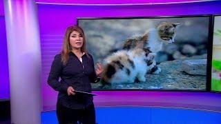حرق قطط في آسفي بالمغرب يشعل الغضب، ولأول مرة يحاكم القضاء المتهم