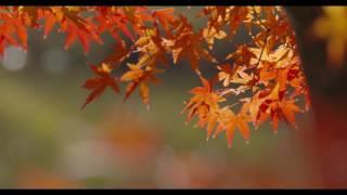 四季の里緑水苑 HD