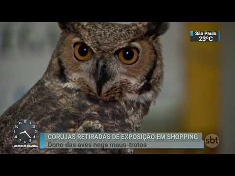 Dono de corujas retiras de exposição nega que elas sofreram maus-tratos | SBT Brasil (02/03/18)