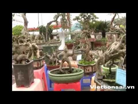 Festival  cây cảnh Bắc Ninh - P4