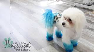 Creative Dog Grooming... Is It Safe?