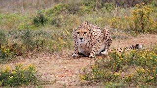 Top 10 Fastest Land Animals Part 2 (5-1)