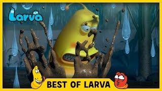 LARVA | BEST OF LARVA | Funny Cartoons for Kids | Cartoons For Children | LARVA 2017 WEEK 37