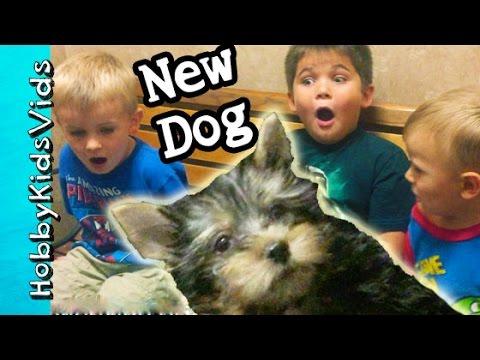 HobbyKids Reaction to FIRST DOG! Surprise Pet Behind the Scenes HobbyPuppy HobbyKidsVids