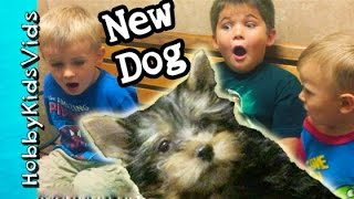 hobbykids reaction to first dog surprise pet behind the scenes hobbypuppy hobbykidsvids