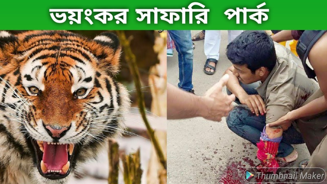 Most Dangerous Safari Park in the World | Angry Royal Bengal Tiger Comes to Forward of Safari Bus