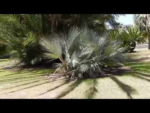 Huntington Gardens: Palm Garden and Jungle Garden