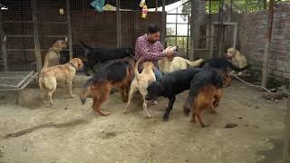 Chinna Dog Kennel In Punjab | Long Hair German Shepherd | Labrador | Pitbull | Dog Kennel | Scoobers