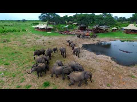 Somalisa in the Green (Secret) Season, Hwange National Park, Zimbabwe