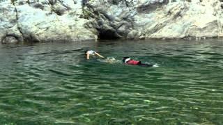 板取川で泳ぎました。 お兄ちゃんの出す水しぶきをパクパクするのが大好...