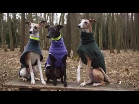 13.3. Agility training with whippets