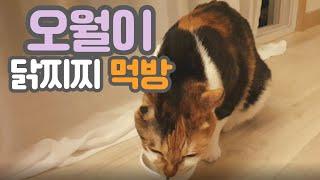 고양이 먹방(feat.오월이) 이어폰plz