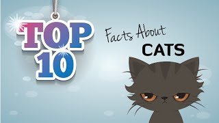10 Cool Cat Facts