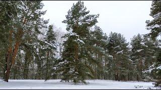 Парк Москворецкий зимой. Красота природы Москвы