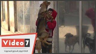 سر الفتى الراقص مع الكلاب فى وسط البلد.