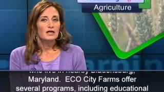 Phát âm chuẩn cùng VOA - Anh ngữ đặc biệt: Urban Farms (VOA)