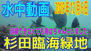 水中動画(2019年12月7日)in 杉田臨海緑地