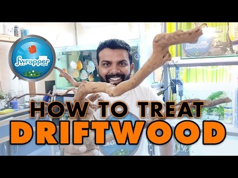How To :  Treat    Prepare Driftwood Before It Goes Into An Aquarium