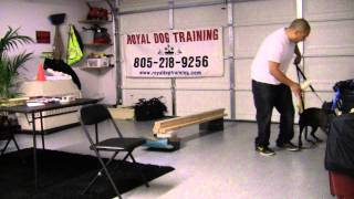 Royal Dog Training: Puppy Training/basic Obedience For Mercedes (6 Month Old Pit Bull)
