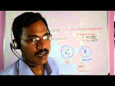Immunology 1 (Tamil)