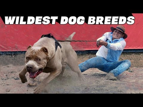 10 Wildest Dog Breeds