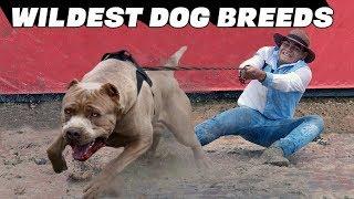 10 Wildest Dog Breeds