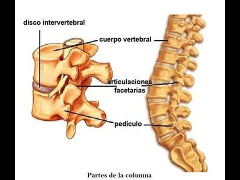 Qué son los Discos intervertebrales? - TvAgro por Juan Gonzalo Angel ...