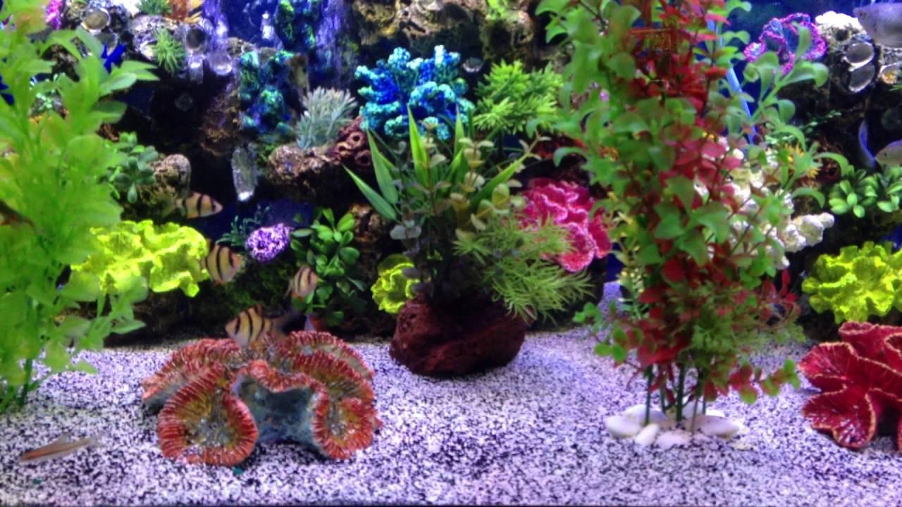 Freshwater aquarium fish jacksonville fl - Freshwater Fish Tanks 904 588 2700 Jacksonville Florida