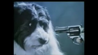RSPCA Shoot a Dog