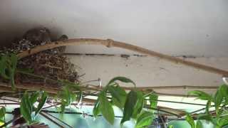 Birds Leave the Nest