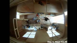 Tiny House Construction - A Week At Tu Delft
