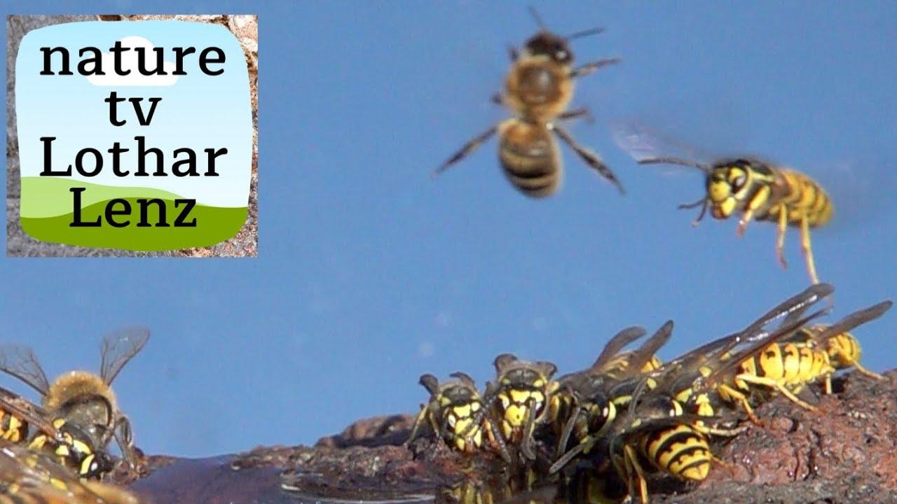 Bee Deutsch