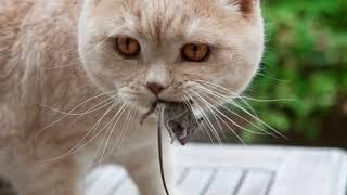 Вот Почему Кошки Приносят Хозяину Домой убитых Животных!